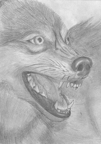 Нарисованные карандашом волки